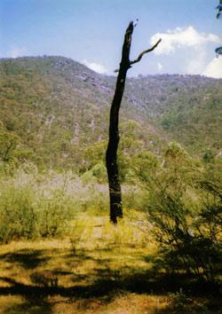 obrázek z knihy o Austrálii - Mezi našimi v Klokánii
